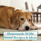 homemade pet odor removal recipes and instructions