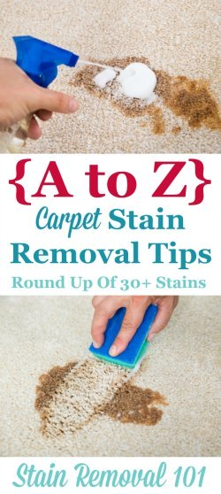 Round up of over 30 articles all about carpet stain removal based on the type of stain, so no matter what spilled on your carpeting you can remove it {on Stain Removal 101} #CarpetStainRemoval #CarpetCleaning #StainRemoval