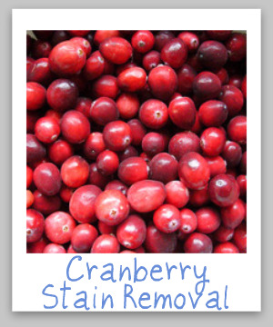 Guide To Removing Cranberry Stains
