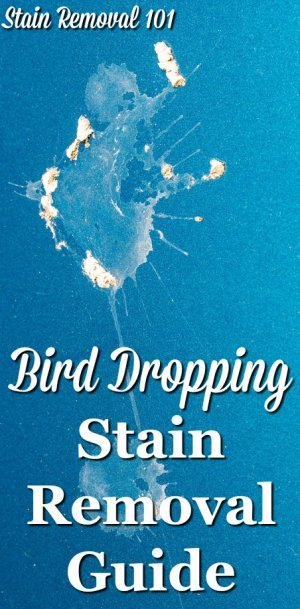 Step by step instructions for bird dropping stain removal from clothing, upholstery and carpet, plus hard surfaces {on Stain Removal 101}