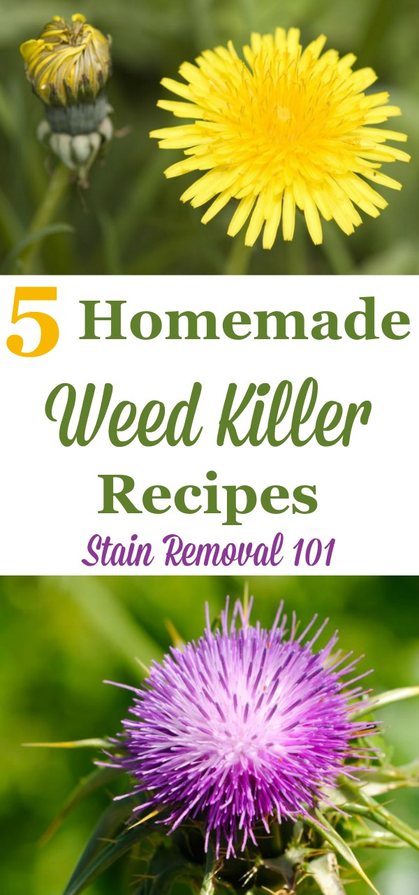 5 homemade weed killer recipes that you can use for isolated weeds to kill them easily, quickly and cheaply {on Stain Removal 101}