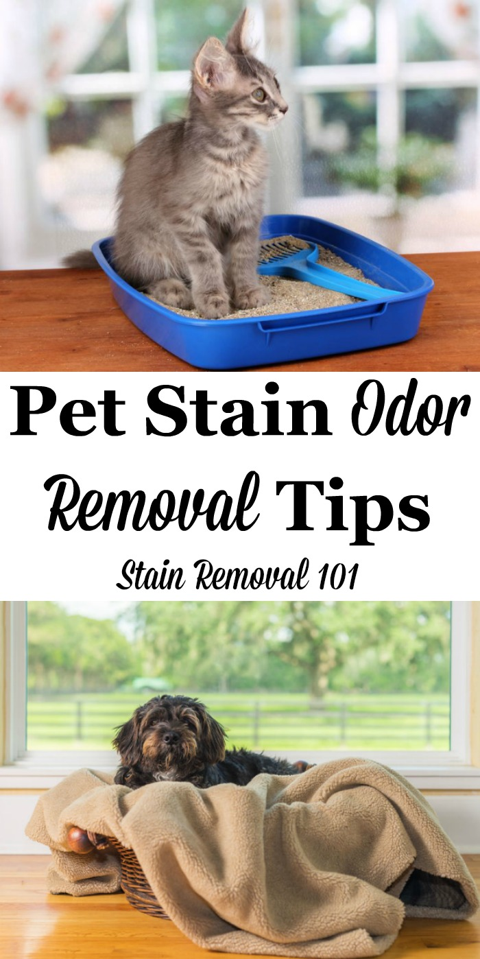 Here is a round up of tips for pet stain odor removal, for removing odors and smells caused by you cats, dogs and other pets from your home, plus a review of some pet odor remover products {on Stain Removal 101} #StainRemoval #OdorRemoval #PetStains