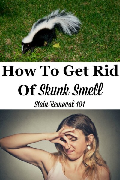 Here are home remedies and homemade recipes, as well as reviews of commercially available products, for how to get rid of skunk smell from your skin, your pets, including dogs and cats, and more when these animals spray {on Stain Removal 101} #SkunkSmellRemoval #SkunkOdorRemoval #SkunkOdorRemover