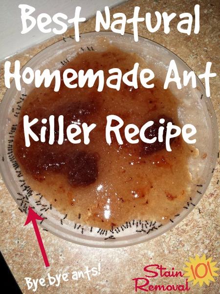 best natural homemade ant killer recipe. Black Bedroom Furniture Sets. Home Design Ideas