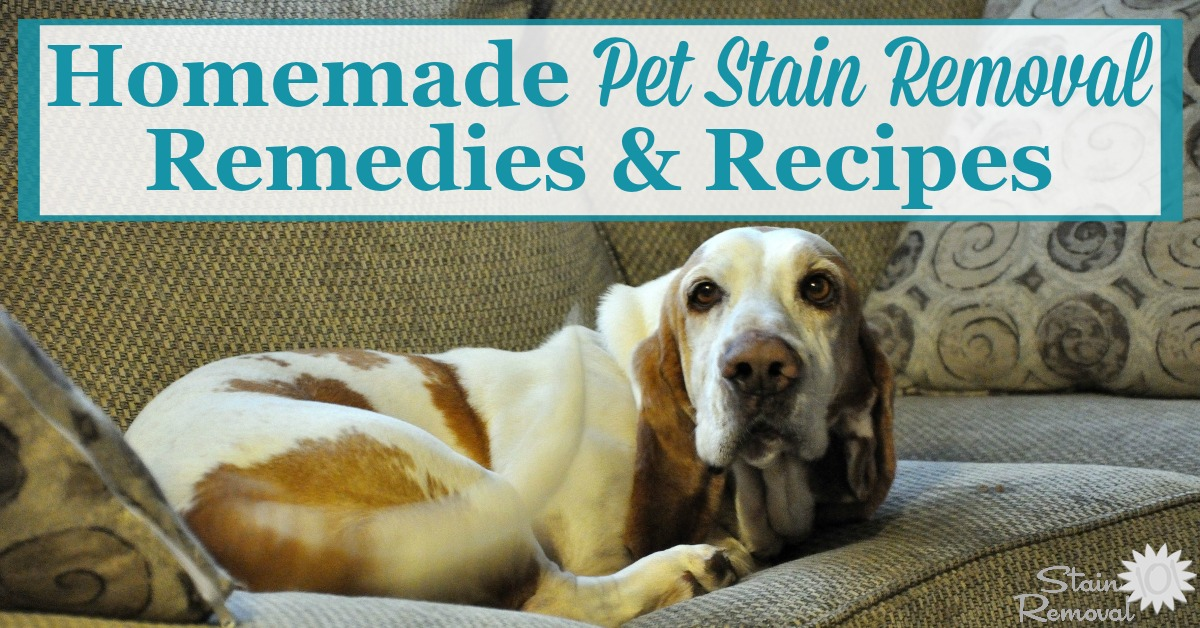 Here is a round up of homemade pet stain removal remedies and recipes that will help you clean up pet stains easily, with items you've already got around your home {on Stain Removal 101} #HomemadeStainRemoval #PetStains #HomemadeRemedies