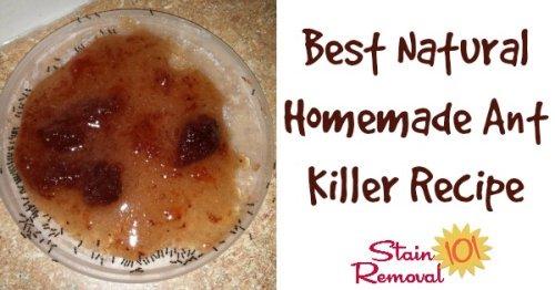 best natural homemade ant killer recipe