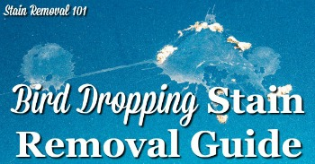 Bird dropping stain removal guide