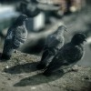 pigeons sitting on a ledge