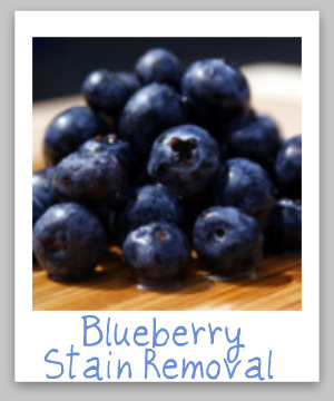 Blueberry stain removal guide