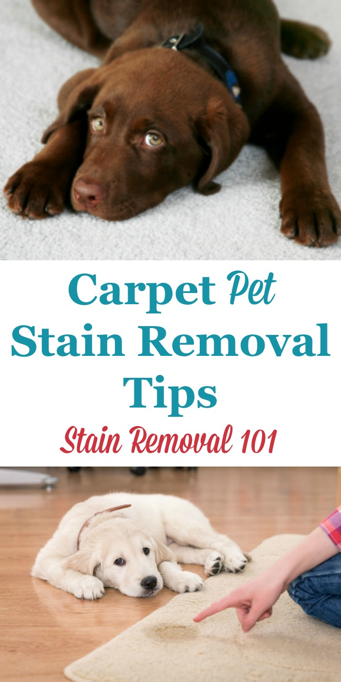 Here is a round up of carpet pet stain removal tips to clean up your carpet after a pet accident. This includes do it yourself and home remedies as well as reviews of various cleaning and stain removal products {on Stain Removal 101} #StainRemoval #PetStains #CarpetStains