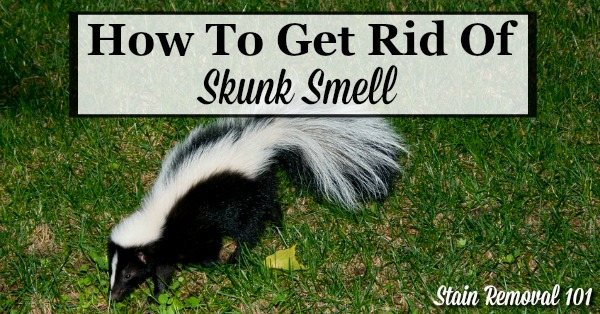 Here are home remedies and homemade recipes, as well as reviews of commercially available products, for how to get rid of skunk smell from your skin, your pets, including dogs and cats, and more when these animals spray {on Stain Removal 101}