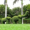 grass topiary