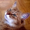 home remedies for pet odors