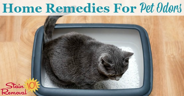 Here is a round up of tips and home remedies for pet odors, to enjoy your pets without the stink {on Stain Removal 101}