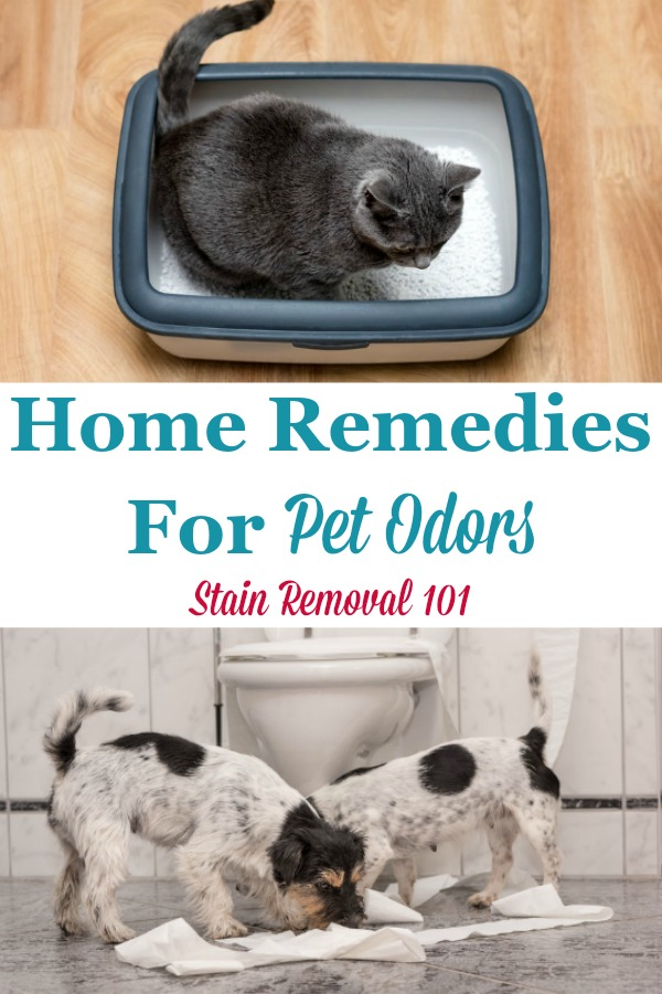 Here is a round up of tips and home remedies for pet odors, to enjoy your pets without the stink {on Stain Removal 101} #PetOdorRemedies #RemovePetOdors #PetOdorRemoval
