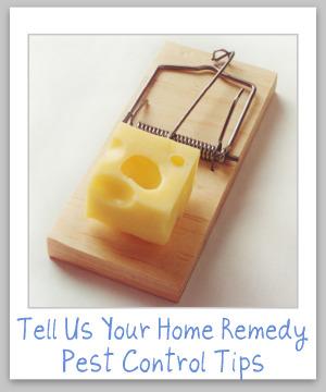 home remedy pest control