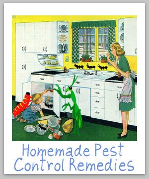 homemade pest control