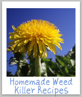 homemade weed killer recipe