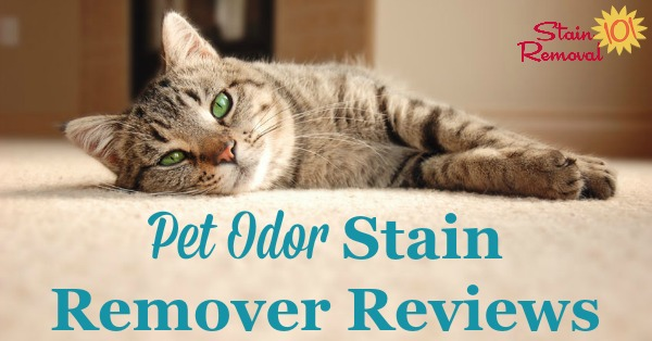 Pet odors seem to linger, so which pet odor stain remover works best to get rid of them? Here is a round up of reviews to find which products work double duty and clean and remove odor {on Stain Removal 101}
