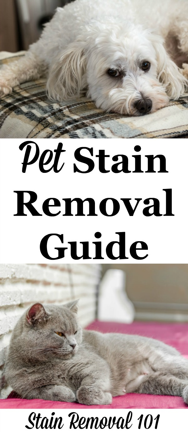 Pet stain removal guide with step by step instructions for clothes, upholstery, and carpet {on Stain Removal 101}