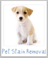 pet stain removal tips