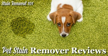 Pet stain remover reviews