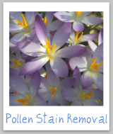 pollen stain removal