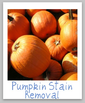 Pumpkin stain removal guide for clothing, upholstery and carpet {on Stain Removal 101}