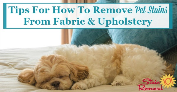 Here is a round up of tips for how to remove pet stain from fabrics and upholstery, including both home remedies and do it yourself methods, as well as reviews of various pet stain remover products {courtesy of Stain Removal 101} #CleaningTips #PetStains #StainRemoval