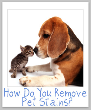 remove pet stain