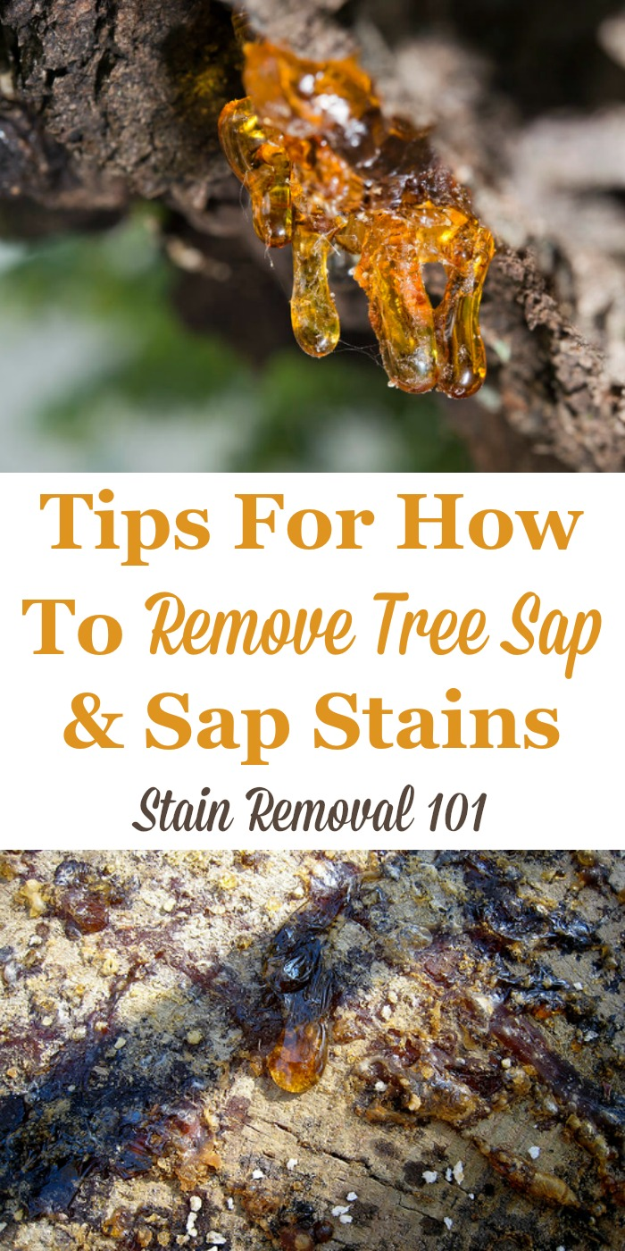Here is a round up of sap stain removal tips and hints for how to remove tree sap from various surfaces, including from clothing, upholstery, carpet, cars, hands, and more surfaces in and around your home {on Stain Removal 101}