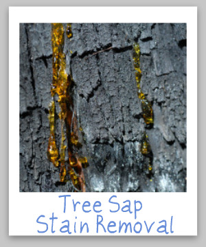 Step by step instructions for tree sap stain removal from clothing, upholstery, carpet, plus hard surfaces like your car {on Stain Removal 101}