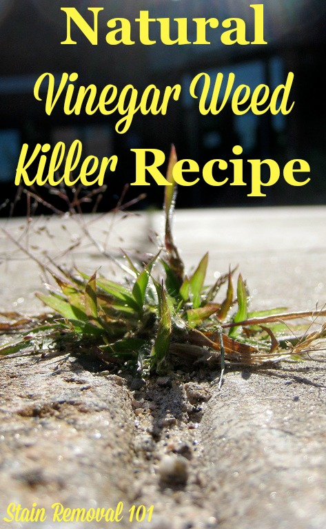 Natural vinegar weed killer recipe for use on isolated weeds such as those in cracks or on the edge of the driveway {on Stain Removal 101} #VinegarWeedKiller #WeedKillerRecipe #NaturalWeedKiller