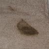 pet vomit on carpet