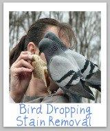 bird poop stains
