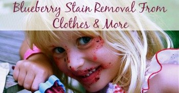 Blueberry stain removal from clothes and more