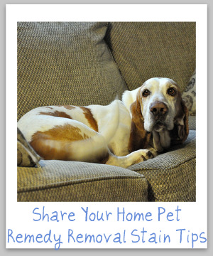 home pet remedy removal stain