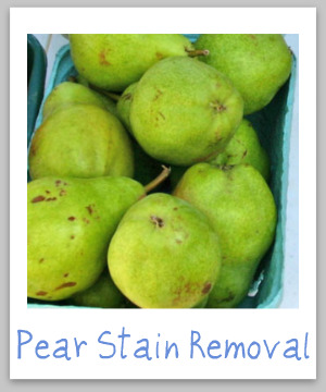 How to remove pear juice and pear stains from clothing, upholstery and carpet {on Stain Removal 101}