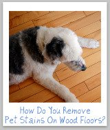 pet stains on wood floors