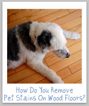 pet stains on wood floors
