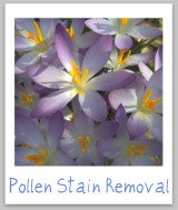 stain removal pollen