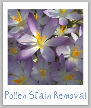 Pollen stain removal guide for clothing, upholstery and carpet {on Stain Removal 101}