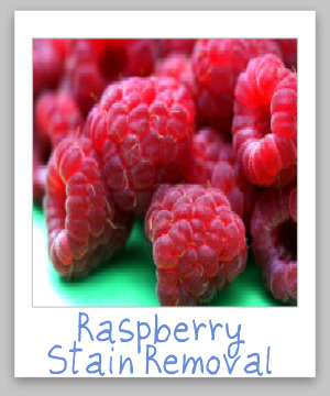 How to remove a raspberry stain from clothing, upholstery or carpet {on Stain Removal 101}