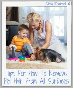 tips for how to remove pet hair from all surfaces