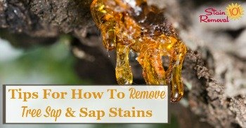 Tips for how to remove tree sap and sap stains