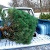 christmas tree in back of truck