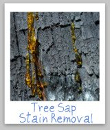 tree sap stains