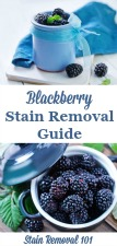 Blackberry Stain Removal Guide