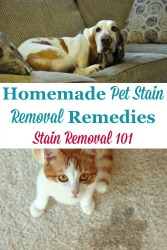 Homemade Pet Stain Removal Remedies