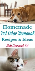 Homemade Pet Odor Removal Recipes